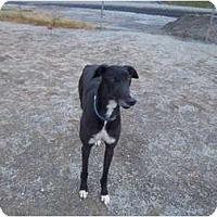 Adopt A Pet :: Ivan - Roanoke, VA