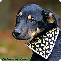 Adopt A Pet :: Riggs - PENDING, in ME - kennebunkport, ME