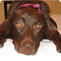 Adopt A Pet :: Addy - Alexandria, VA
