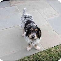 Adopt A Pet :: tammy fay - houston, TX