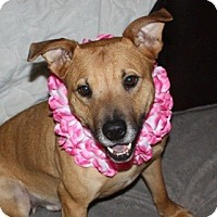 Adopt A Pet :: Maggie - in Maine - kennebunkport, ME