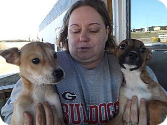 Hound (Unknown Type) Mix Puppy for adoption in Thomaston, Georgia - Lila & Nero