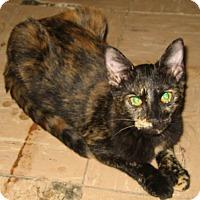 Adopt A Pet :: Trina - Bulverde, TX