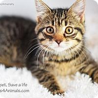 Adopt A Pet :: Bella - Xenia, OH