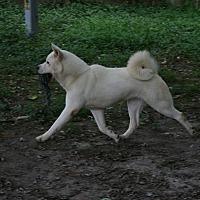 Adopt A Pet :: Roxy - Virginia Beach, VA