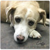 Adopt A Pet :: Taffy - Pascagoula, MS