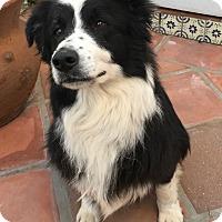 Adopt A Pet :: BUNNY - San Pedro, CA
