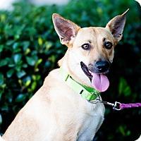 Adopt A Pet :: Kiki - Houston, TX