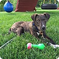 Adopt A Pet :: Orion - Elgin, IL