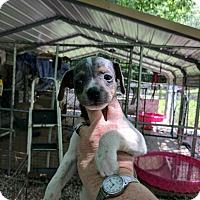 Adopt A Pet :: Oddy - Hohenwald, TN