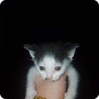 Adopt A Pet :: Cow 2 - Parkton, NC