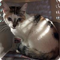 Adopt A Pet :: Cali - Loogootee, IN