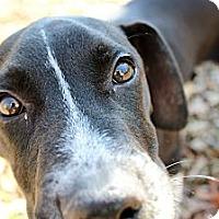 Adopt A Pet :: Jeffrey - Dacula, GA