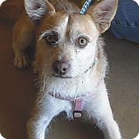 Adopt A Pet :: Jax - Wickenburg, AZ