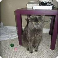 Adopt A Pet :: Big Boy - Mobile, AL