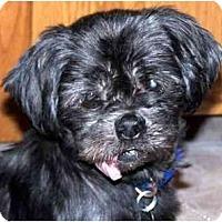 Adopt A Pet :: Mia-NY - Edmeston, NY