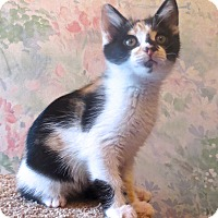 Adopt A Pet :: Freckles - Lafayette, CA