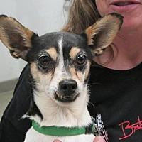 Adopt A Pet :: Puppy - Fresno, CA