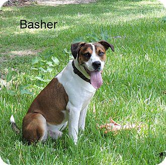 Labrador Retriever/Hound (Unknown Type) Mix Dog for adoption in Slidell, Louisiana - Basher