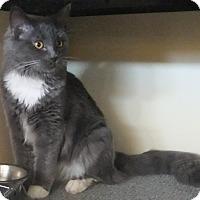 Adopt A Pet :: Cecil - Edmonton, AB