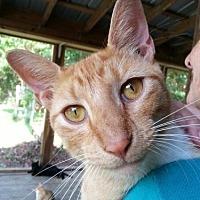 Adopt A Pet :: Morrisey - Freeport, FL