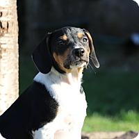 Adopt A Pet :: Rusty - Alexandria, VA