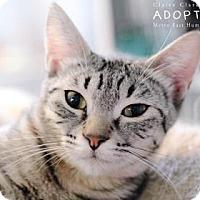 Adopt A Pet :: Jasmine - Edwardsville, IL