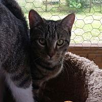 Adopt A Pet :: Jezebel - Bronson, FL