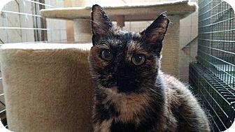Domestic Shorthair Cat for adoption in Wakinsville, Georgia - Camilla