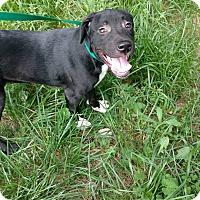 Adopt A Pet :: Grant - North Brunswick, NJ