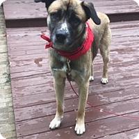 Adopt A Pet :: Kenny - Lawrenceville, GA