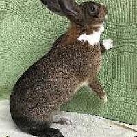 Adopt A Pet :: Frankie - Woburn, MA