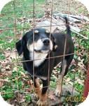 Labrador Retriever/Terrier (Unknown Type, Medium) Mix Dog for adoption in East Hartford, Connecticut - Jessie