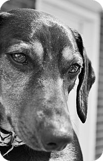Dachshund Mix Dog for adoption in Decatur, Georgia - Keno