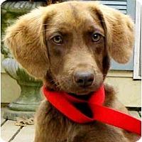 Adopt A Pet :: MEG - Wakefield, RI