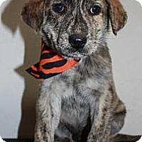 Adopt A Pet :: Jeff - Stilwell, OK