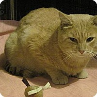 Adopt A Pet :: Frito - Quincy, MA