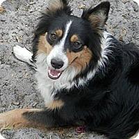 Adopt A Pet :: Sara - Nokomis, FL