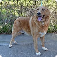Adopt A Pet :: Jax - Foster, RI