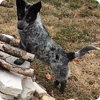 Adopt A Pet :: Lorenzo - Marlton, NJ