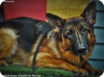 German Shepherd Dog/German Shepherd Dog Mix Dog for adoption in Portland, Oregon - Teddy
