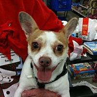 Adopt A Pet :: Meme - Fresno, CA
