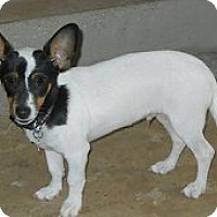 Adopt A Pet :: Tugg OToole - Oklahoma City, OK