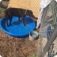 Adopt A Pet :: Buck`SUPER URGENT - Providence, RI