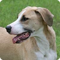 Adopt A Pet :: Waylon - Lufkin, TX