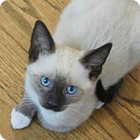 Adopt A Pet :: Chet - Davis, CA