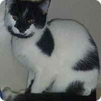 Adopt A Pet :: Annaliase - Hamburg, NY
