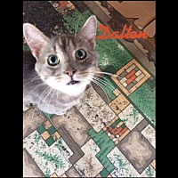 Adopt A Pet :: Dalton - Iroquois, IL