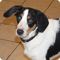 Adopt A Pet :: Sol - Prole, IA