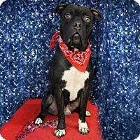 Adopt A Pet :: *STITCH - Sugar Land, TX